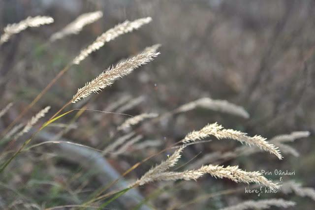 domogled-peak-hike-flora