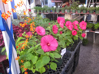 Binder's Flowers