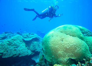 Menjelahah Wisata Selam Kepulauan Anambas