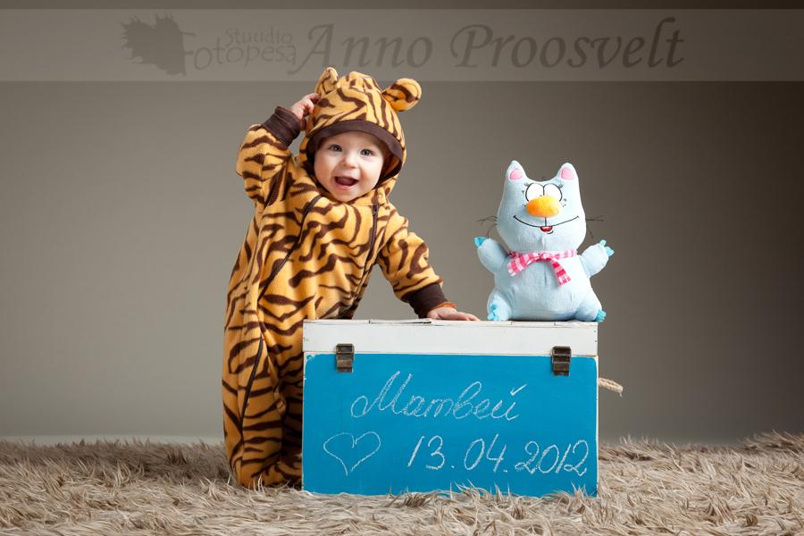 poiss tiigri kostyymis, fotostuudio Fotopesa