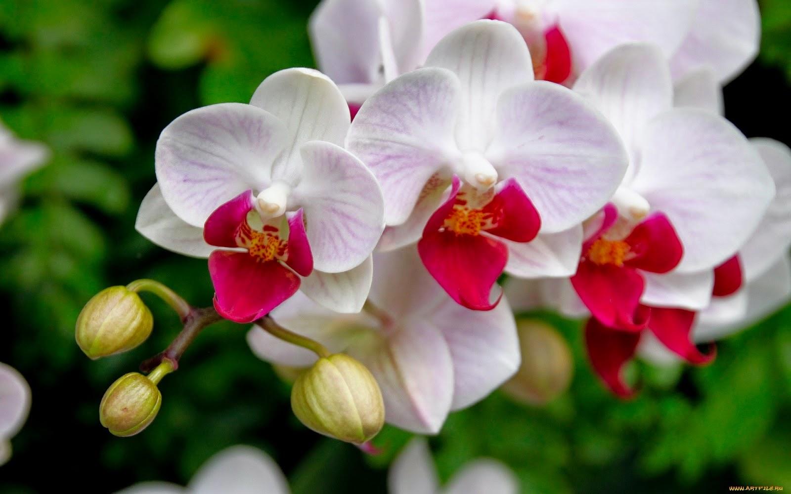 Como cultivar e cuidar das suas orquídeas!