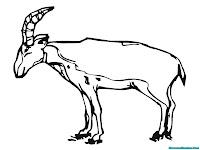 Lembar Mewarnai Gambar Antelop