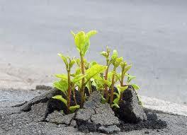 Ό,τι βιώνουμε είναι όνειρο μέσα σε όνειρο  Flower+on+a+cement