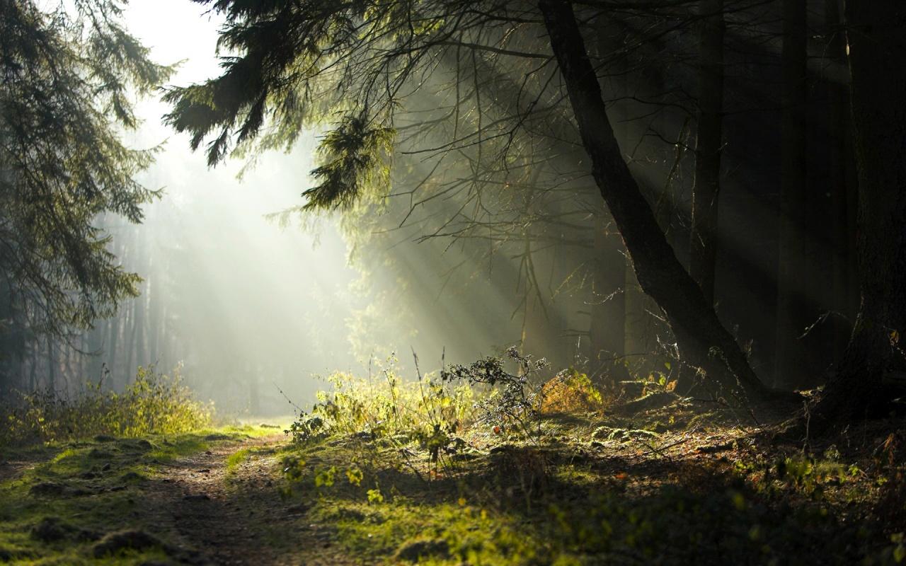 Volvamos Amor! Luz+en+el+bosque