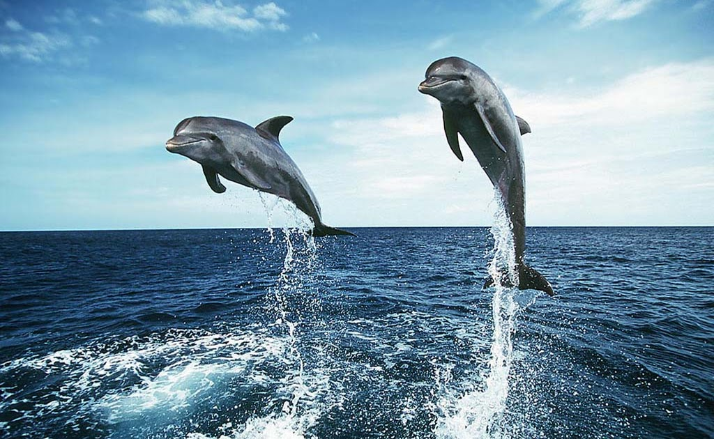 Report Text Quot Dolphins Quot Learn Everything Here