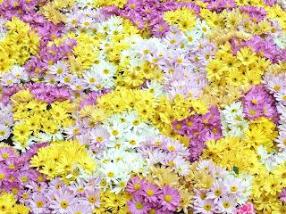 Toko Bunga Florist Di Jakarta - Murah, Cantik Dan Berkesan