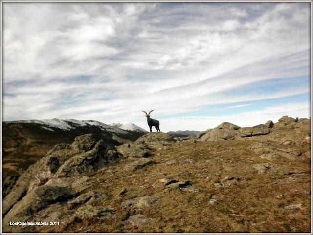 Cumbre de Bailanderos, desde Puerto de la Morcuera