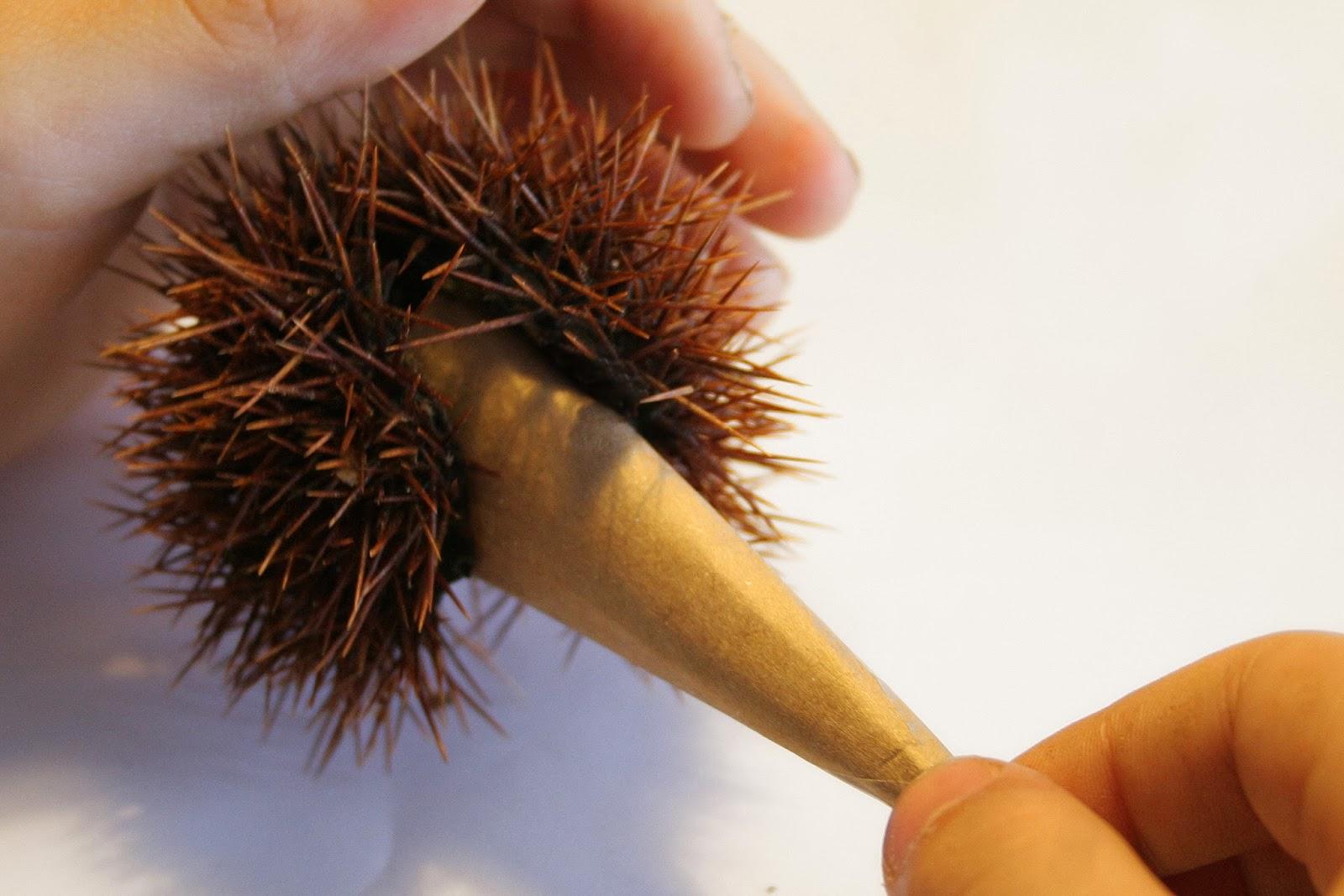 Manualidad: Erizo con cáscara de castaña10