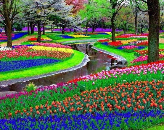 Un recorrido por nuestro planeta: asombrosas imagenes. - Página 2 Keukenhof+parque+tulipanes