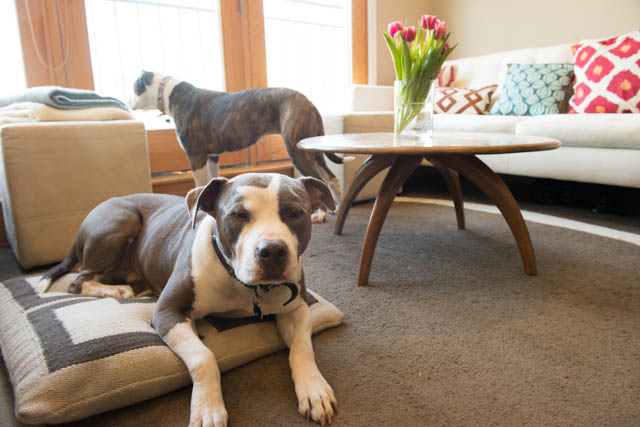 DoggyStyle: On Dog Friendly Furniture
