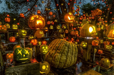 hundreds of orange pumpkins carved and lit up in the park for the jack o lantern spectacular