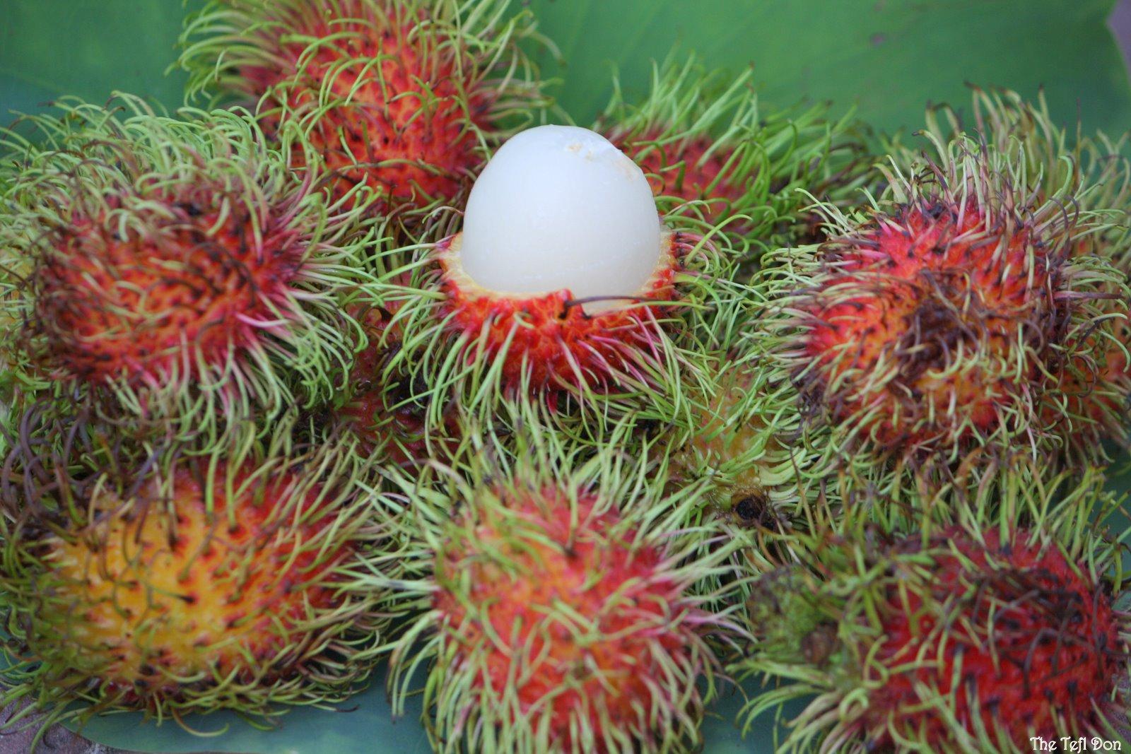http://4.bp.blogspot.com/-84lPN1WaMAo/TZyYA9Rlp-I/AAAAAAAABK0/siEewSKGKgc/s1600/Rambutan+Fruit+Tropical+Fruit.JPG