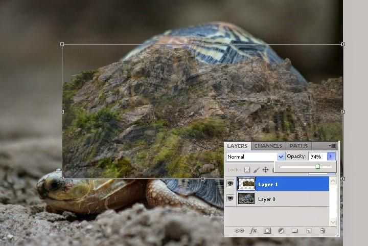 manipulasi hewan, manipulasi photoshop
