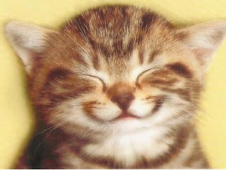 happy-cat-1024.jpg