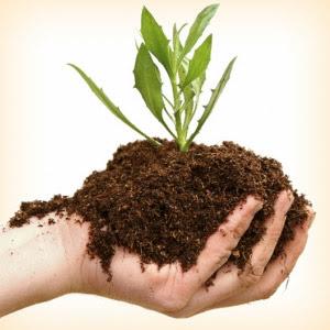 Manfaat dan Keunggulan Penggunaan Pupuk Organik