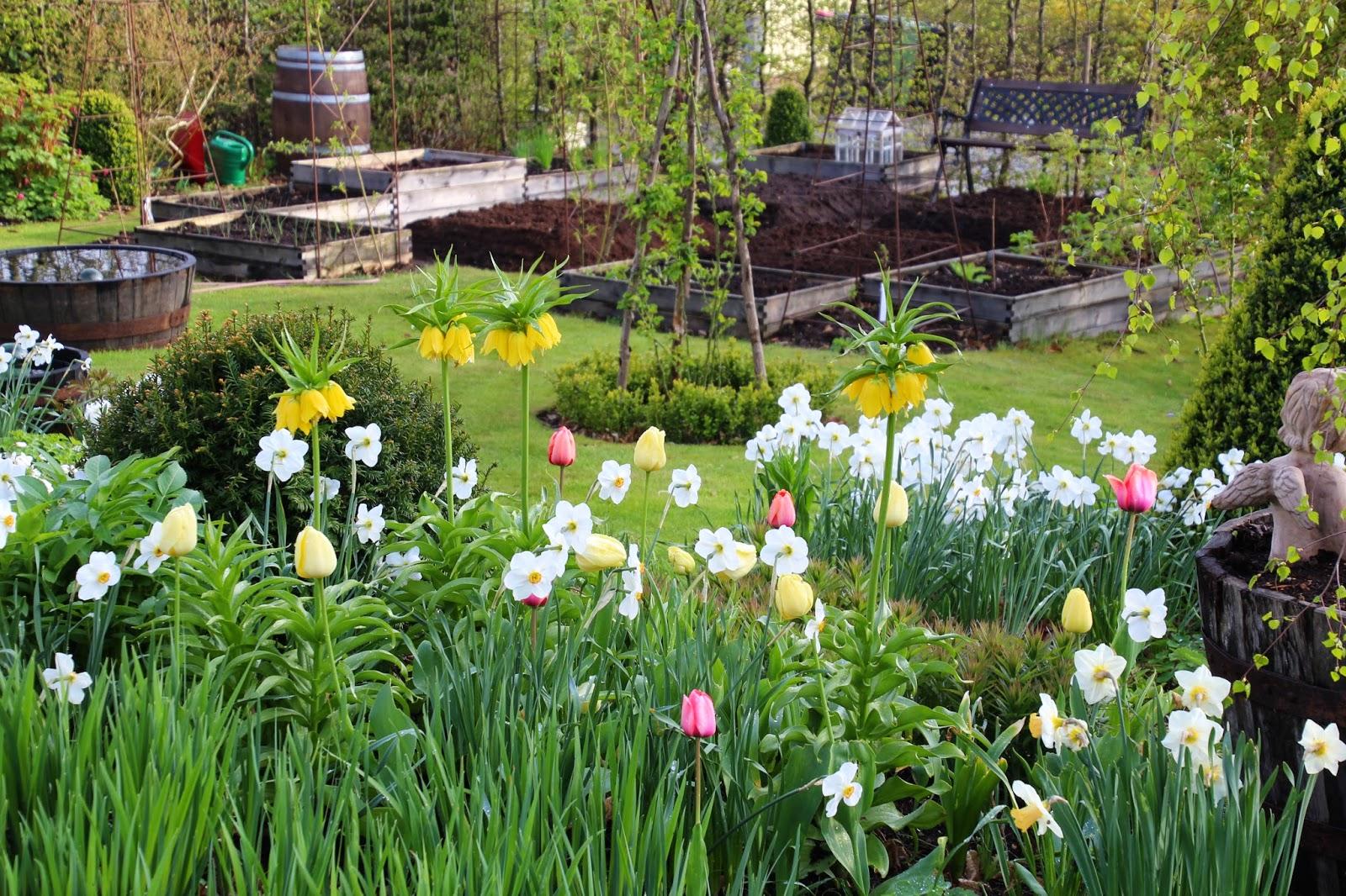 köksträdgård odla grönsaker