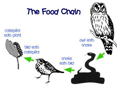 Environmental Science Ko Food Chain