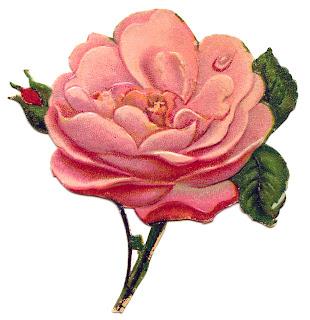 http://4.bp.blogspot.com/-86_maxc1rdo/T_xf9vxJCLI/AAAAAAAASwE/Tb-0c6PBHNw/s1600/ScrapPink-Rose-Antique-GraphicsFairy.jpg