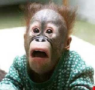 Funny Baby Monkey Picture