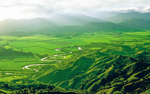 Valle de Cocora paisajes naturales de Colombia