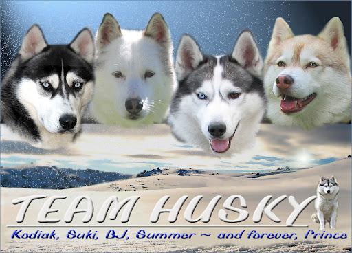 Team Husky