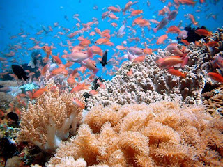 Permalink to Benefits of Coral Reef