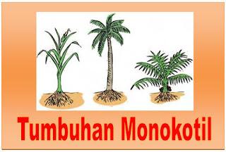 Mengenal Ciri-Ciri Tumbuhan Monokotil Dan Cotohnya
