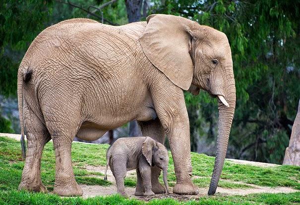 animal and their adorable mini-me 17