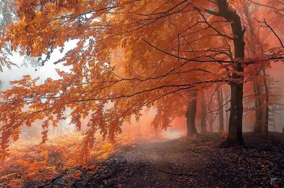 غابة  في فصل الخريف