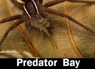 Predator Bay