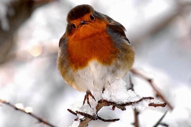 Come nutrire gli uccelli in inverno