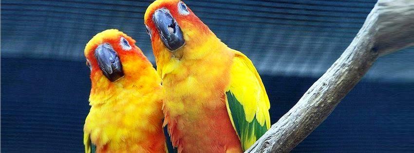Couverture de facebook perroquets