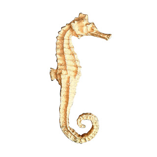 Vintage 1970's William de Lillo gold seahorse brooch pin.