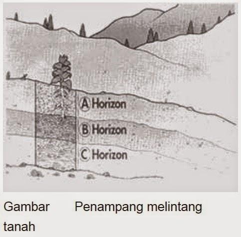 Apakah yang Dimaksud dengan Profil Tanah itu?
