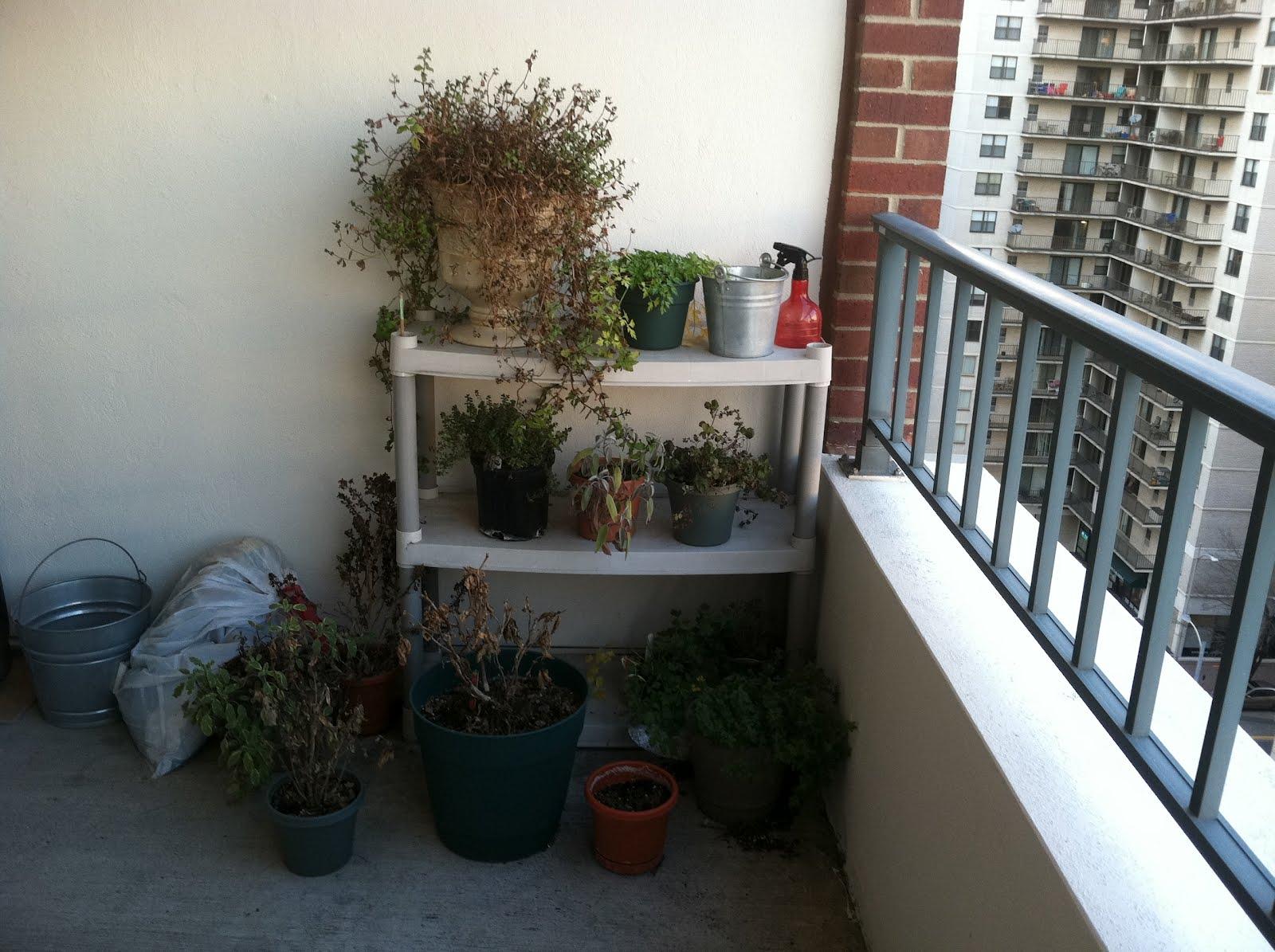 thrifty dc cook winter herb garden