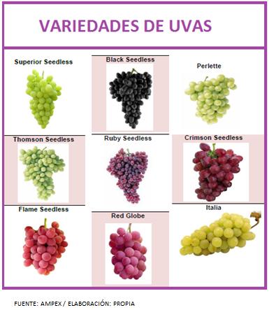 Uvas peruanas aib agroindustrias septiembre 2013 - Variedades de uva de mesa ...