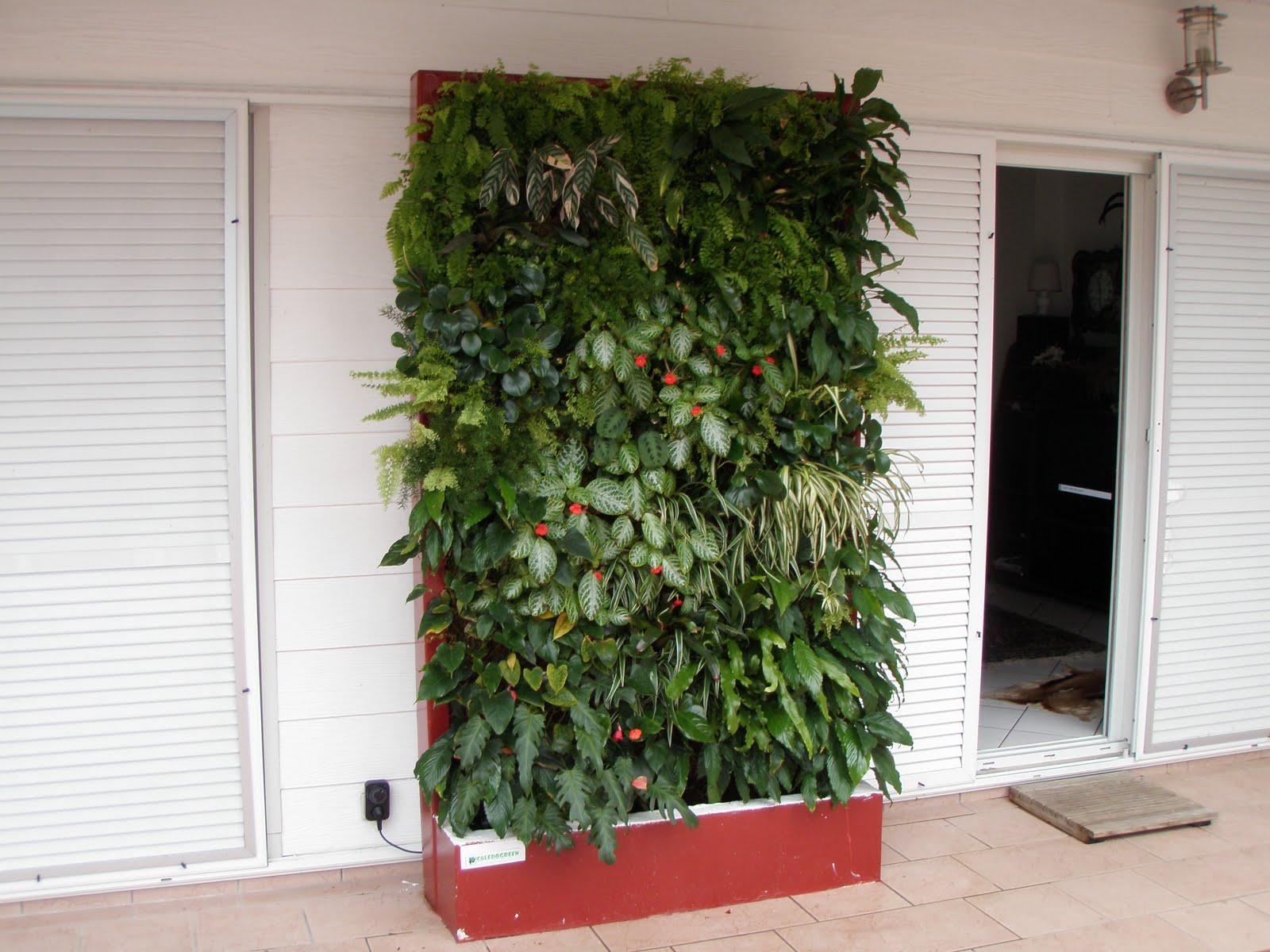 caledogreen murs v g taux mur v g tal magnin. Black Bedroom Furniture Sets. Home Design Ideas