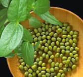 Taksonomi Kacang Hijau