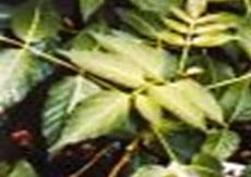 BIDURI