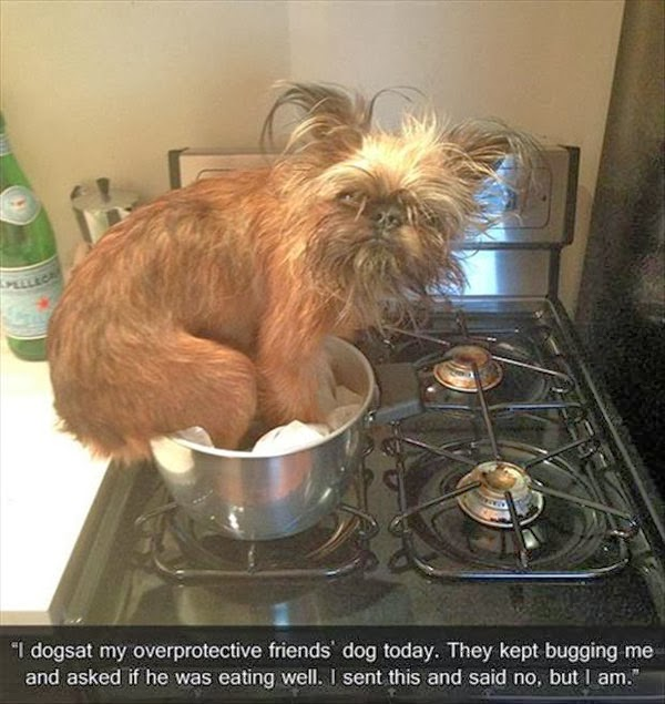 funny picture of dog in a sauce pan
