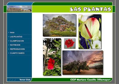 Colegio jos calder n las plantas funciones fundamentales for Plantas fundamentales
