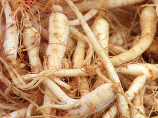 Panax ginseng can help the body and mind.