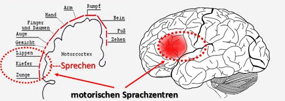 Eggetsberger Info Blogger Blog Lässt Sich Sprachbegabung Messen