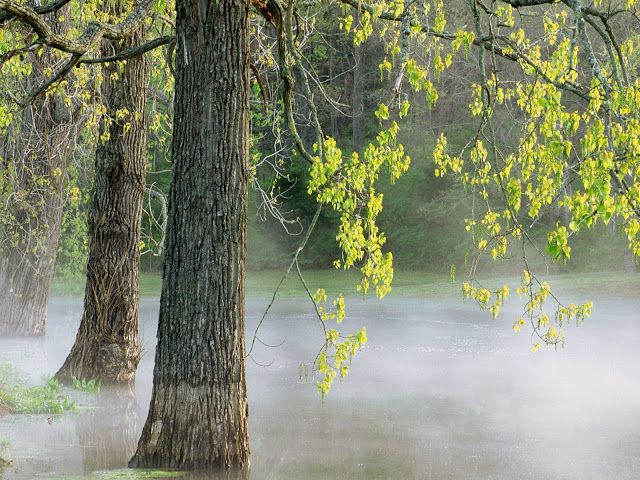 Morning fog at Percy Warner Park Tennesse 3D Nature Wallpaper