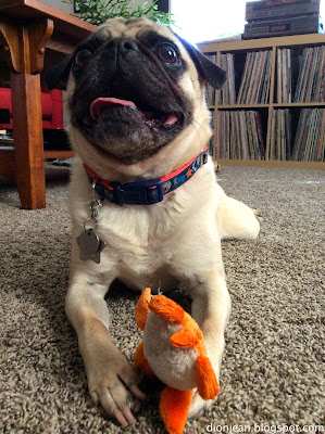 Pug smiling with his tiny turtle toy