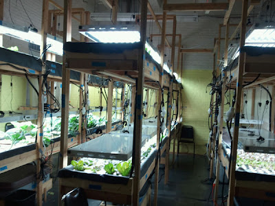 Gardening in the boroughs of nyc hydroponic farm intern for Indoor gardening nyc