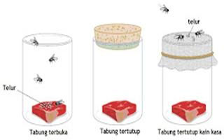 Pembuktian Teori Biogenesis