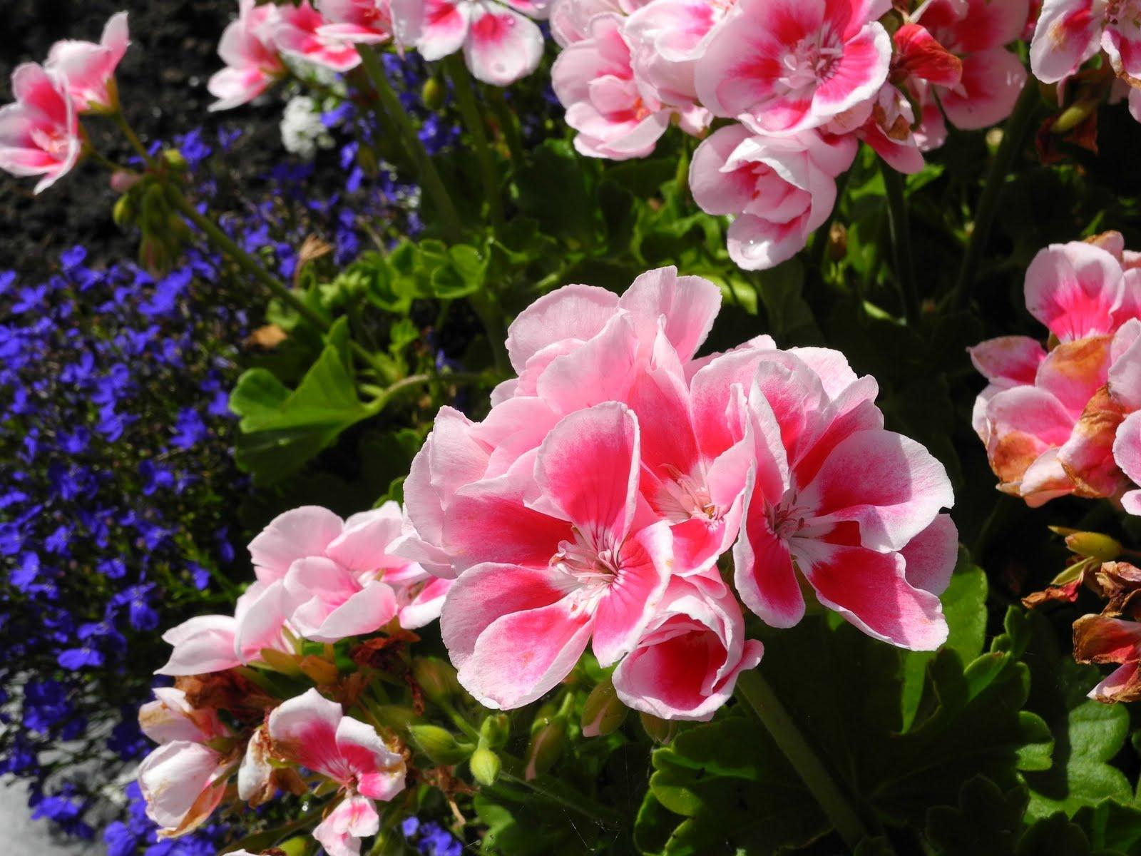 cupcake studio germany flowers
