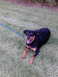 Χάθηκε σκυλάκος στην περιοχή της Πεντέλης. Τον έχει δει κανείς?