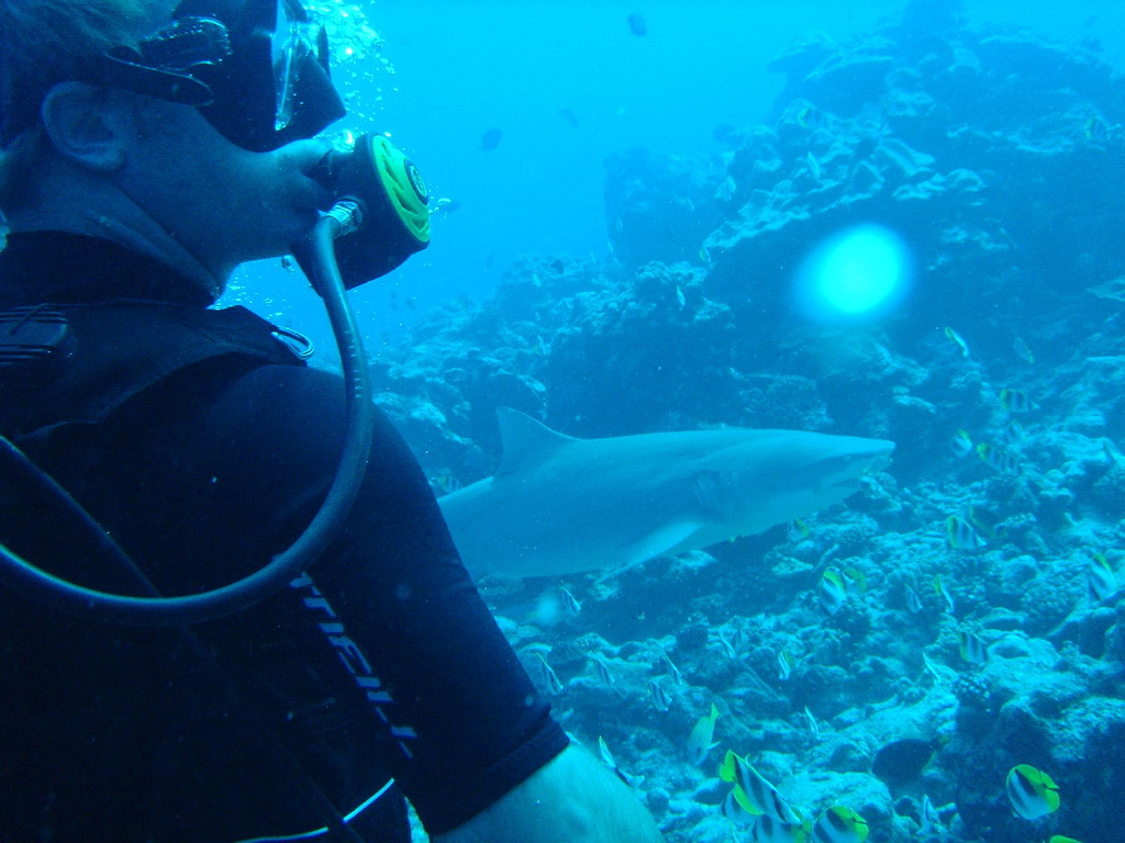 Bora Bora Lemon Shark